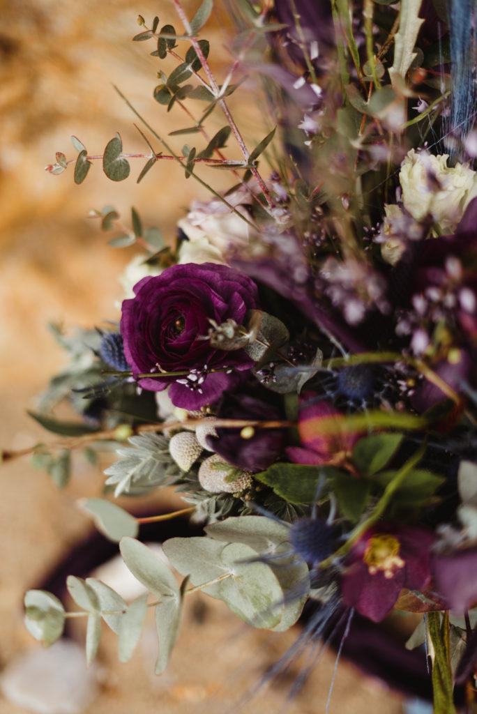 renoncules violettes